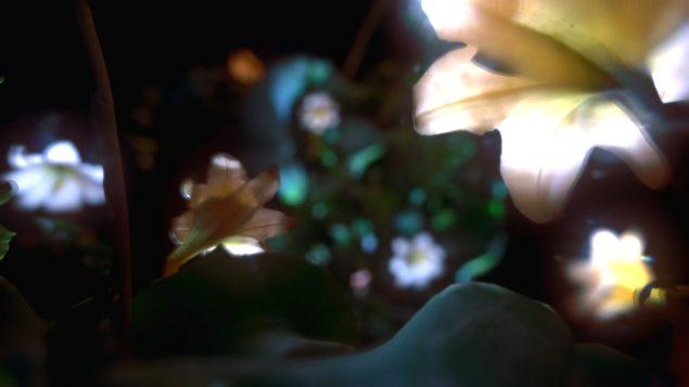 Ann Lislegaard: Pollen Messages, still