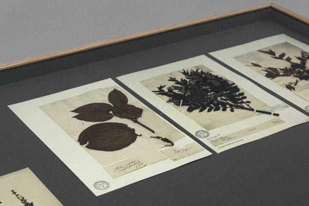 Ebbe Stub Wittrup, Botanical Drift. Wallich Herbarium. Installation view at Copenhagen Contemporary, Botanical Drift, 2020. Photo: Anders Sune Berg.